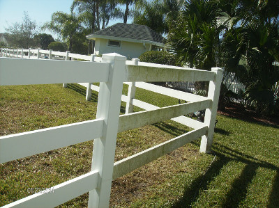 Mildew can grow on paddock fences, especially in South Florida.